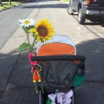 Pregnancy and infant loss walk to remember